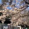 桜 開花 2021