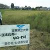 学外畑の草刈りと 学内畑の刈り取りと 油の水洗と・・・