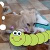 犬の幼稚園通学2日目・まだまだ幼稚園にも慣れてないけど様子はどうだった?
