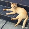 猫たちも暑いよ(=^..^=)