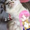 家が猫カフェ?ネコ動画付き☆