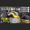 カルガモ親子引っ越しチャレンジも・・・トラブル発生。親子3組 孵化後9日目+3日目親子引っ越しチャレンジ+2羽生き残り。 5月8日今日撮り野鳥動画まとめ