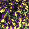 緑道の花壇