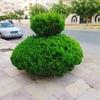 🌿アンマンの植木達🍃