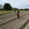 9月30日 菜種播種