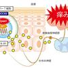 九州大学によるEPAS1の発表について