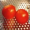 ミニトマト、収穫!