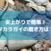 タカラガイの最も安上がりで簡単な磨き方・手入れ方法は?(100均で揃う)