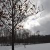 今週のお題 - 雪景色 -