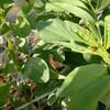菜園の虫たち