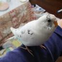 Lily birdのイラスト・グッズ制作活動のブログ
