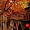 【悲報】京都旅行が中止になりました