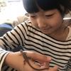 (娘の)カナヘビの飼育記録pt4(奇跡の復帰)