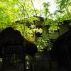 【旅行】熊本 黒川温泉~黒と緑の温泉街~