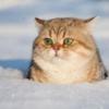 猫咬傷への対応