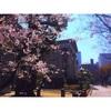 大阪カフェ巡り✩中之島&福島のオシャレ可愛い写真映えランチ&スイーツ♪