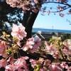 静岡1泊2日旅行で美味しい食事とお酒で大満足!
