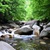 【渓流】初めての渓流釣り情報|自然が好きなら間違いなくおすすめ