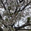 いろんな春を見つけたー!!