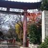 ★鷲宮神社(埼玉県久喜市)