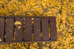 11月の仙台を散歩。紅葉を楽しむ朝。