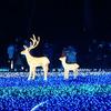 奈良公園 なら瑠璃絵 2018年