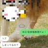 夜のラン(7月29日)
