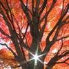 軽井沢→冬が始まる秋の終わりの日記