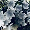 ありがとう、表参道・原宿のお花たち