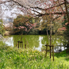 山ノ池(京都府長岡京)