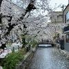 こんなうんざりな毎日に今年のサクラを送ります〜  #サクラ #今年のサクラ   #桜