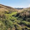 阿蘇山原野の放牧