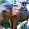 ラオス:ルアンパパーンで象乗り免許を日帰りで取得!!【20日目】