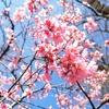 春を楽しむ。