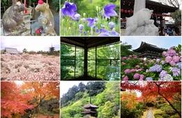 【シーズン別】花&植物と一緒に楽しめる!京都の神社仏閣23選