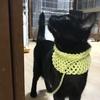 我が家の動物さんたち黒猫編