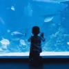 世界一古い水族館でエッフェル塔とお魚を楽しむ【パリ水族館】