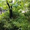 大雨・・季節の移行で・・片頭痛・・イテテ(-_-メ)・・・