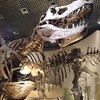 子連れで国立科学博物館へ。恐竜のボーンを見てきました。