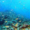 ♪魚影がハンパじゃない次元の慶良間の夏♪〜沖縄ダイビング・慶良間〜