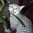 Invasive Cat's blog