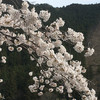4月の高水三山