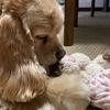 保護犬から家庭犬になって1年|芽以ちんの行動に変化が・・