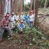 市有林のヒノキの間伐  7月2回目