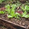 箱庭キッチンガーデンで始める!家庭で自然農!
