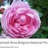 ブルガリアの国花は「花の女王」とも呼ばれるバラです.バルカン山脈の南に位置するローズバレーでは,バラ栽培が盛んに行われ,ブルガリアは世界最大のローズオイルの生産国になっています.毎年6月の第一週末にローズフェスティバルは,世界中の観光客やゲストを魅了する非常に人気のあるお祭りとなっています.バラはブルガリアの国花で,バラの生産は,国の経済だけでなく,文化の重要な一部分です.