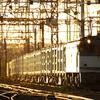 夕陽ギラリの「クリーンかわさき号」を狙う 貨物列車撮影 8/3