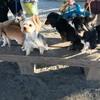 犬友さんと3時のお散歩♪ 写真撮るの難しい〜