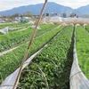 農園日誌ーこの国の行方-PARTⅣ地域復興への新たなる試み