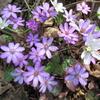 花の山二座